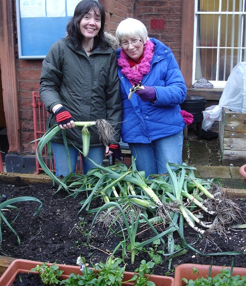 Harvesting the leeks at the Salvation Army, Penrith