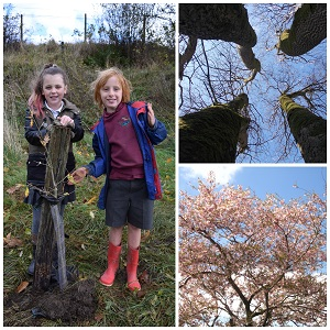 Tree Whisperers project at Shap