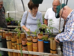 An Eden resident shows others how to grow veg in pipes